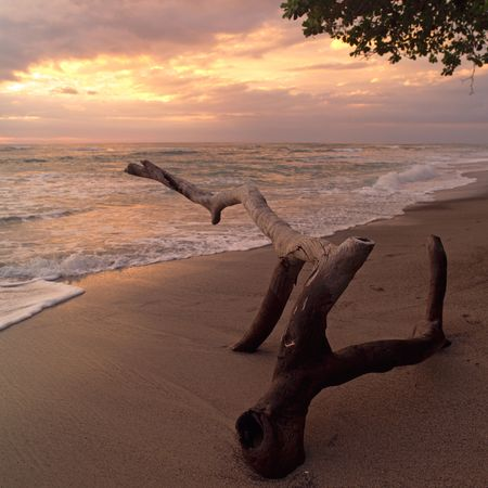 Malpais in Costa Rica,Driftwood on beach in Costa Rica Stock Photo - 2334805