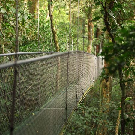 Monte Verde Costa Rica,Suspension Bridge in Costa Rica photo