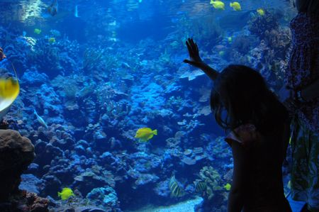 Lifestyle Maui,Girl looking in aquarium Stock Photo - 2347861