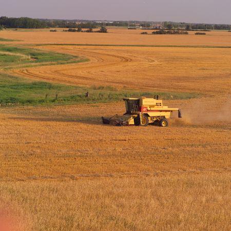 Canadian Prairies,Harvesting wheat Stock Photo - 2348621