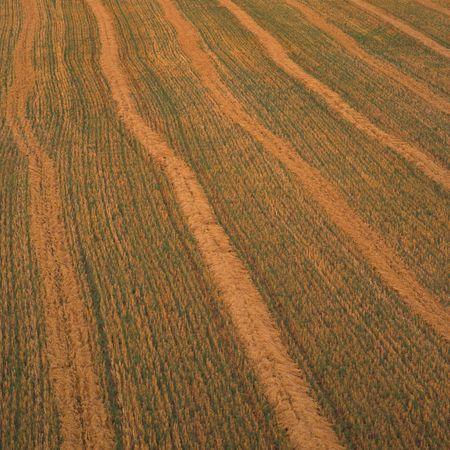 Canadian Prairies,Wheat Field Stock Photo - 2348645