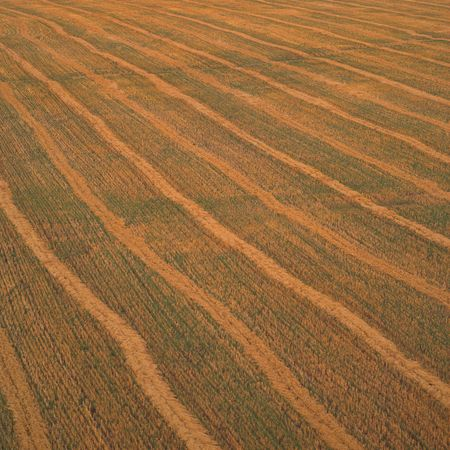 Canadian Prairies,Wheat Field Stock Photo - 2348649