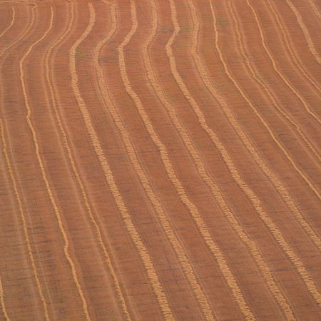 Canadian Prairies,Harvested wheat Stock Photo - 2348619