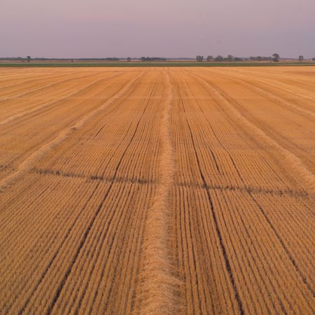 Canadian Prairies,Aerial view of harvested wheat field Stock Photo - 2348530