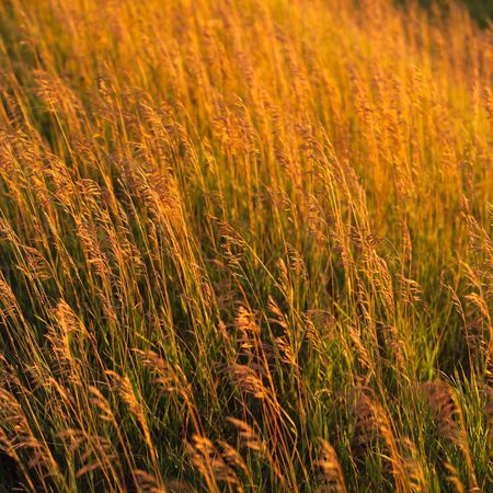 Canadian Prairies,Crop in prairie field Stock Photo - 2348545
