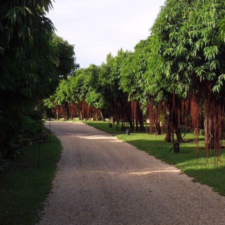 cay: Parrot Cay,Path amongst trees