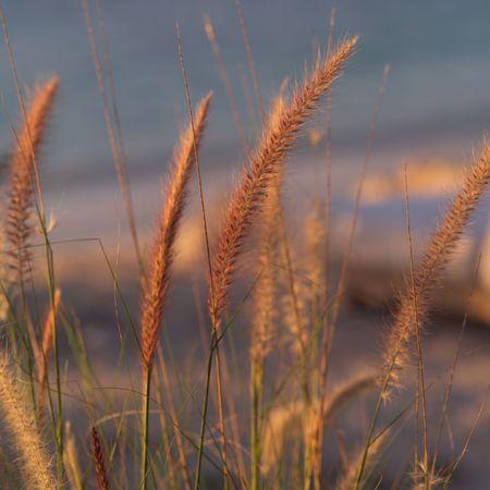cay: Parrot Cay,Grains