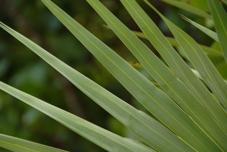 cay: Parrot Cay,Tropical plant in Parrot Cay