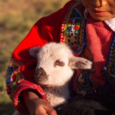 the lama: Cusco Peru, Girl holding Lama