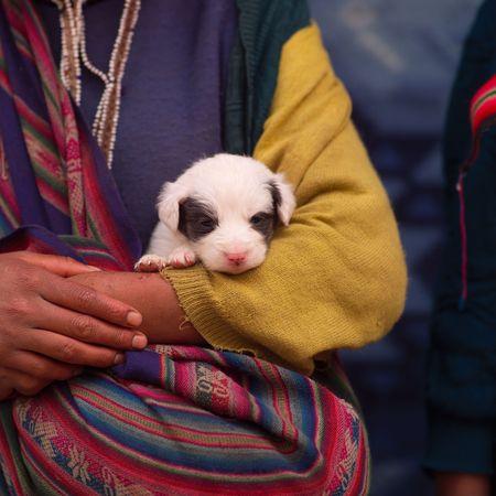 pisaq: Pisaq Market in Peru,  puppy