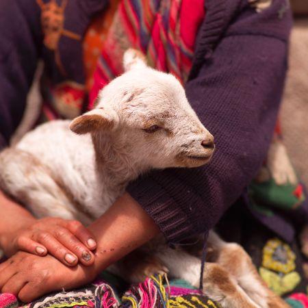pisaq: Pisaq Market in Peru, Person holding  goat