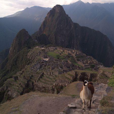 the lama: Peru - Machu Picchu, Lama in Peru