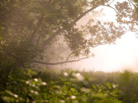 Branson Missouri, Sun shining through trees 版權商用圖片