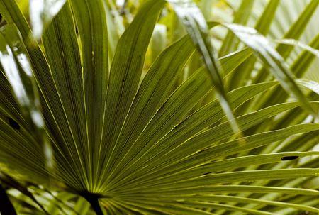 Tulum Mexico, Close up of palm leaf
