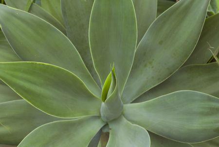 flowering plant: La fioritura delle piante Archivio Fotografico