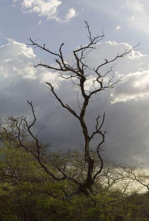 tree dead: Albero morto nel bosco