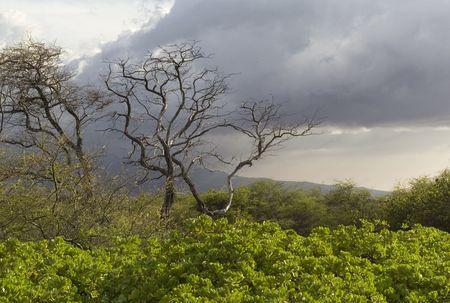 arboles secos: Los �rboles muertos en el bosque