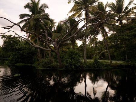 backwater: Shoreline on lake, Backwater, Kerala, South India