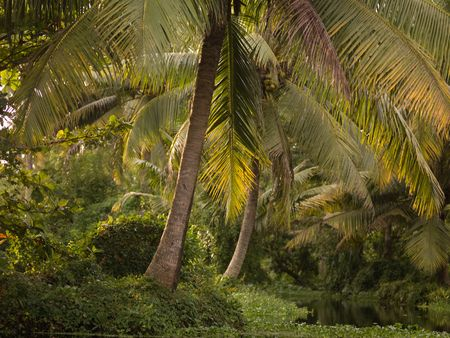 backwater: Tropical Forest in Backwater, Kerala, South India Stock Photo