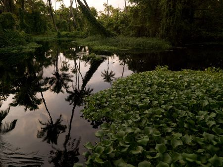 Tropical Forest in Backwater, Kerala, South India Stock Photo
