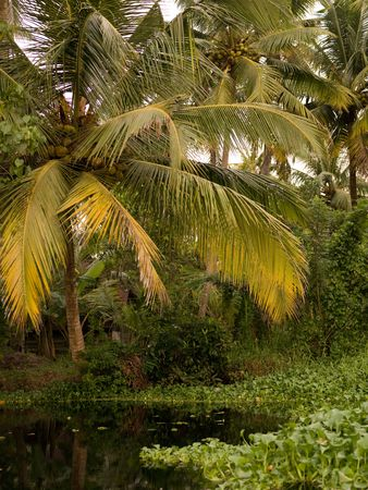 levit: Tropical Forest in Backwater, Kerala, South India Stock Photo