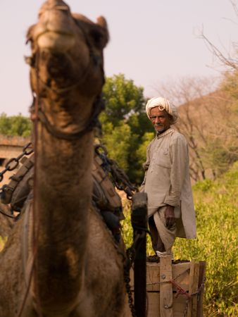 Man standing in a cart being pulled by a camel Фото со стока
