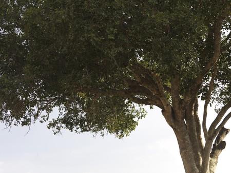 Tree top in Kenya Africa