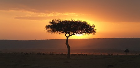 Tree at sunset in Kenya Africa