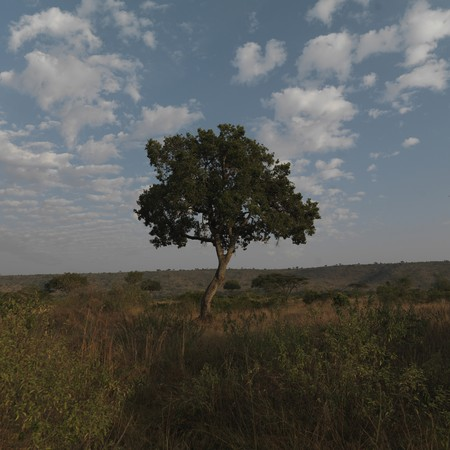 Tree in Kenya Africa Stock Photo