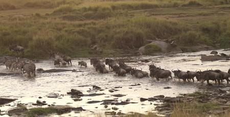 levit: Great Migration river crossing in Kenya Africa