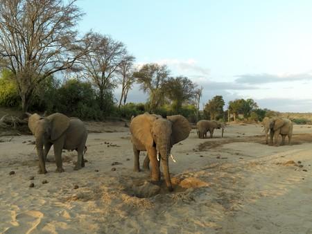 levit: Elephants in Kenya Africa