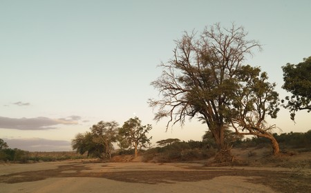 Tree in Kenya Africa Stock Photo - 7188338