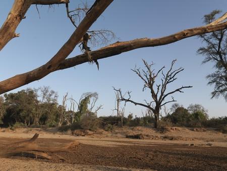 levit: Silhouette of dried tree in Kenya Africa