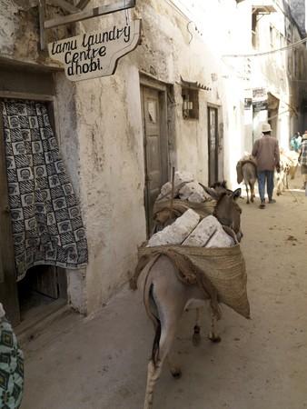 levit: Donkey walking through Lamu Town, Africa