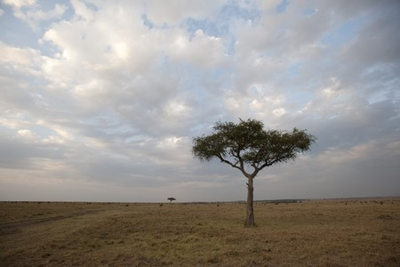 Kenya landscape photo