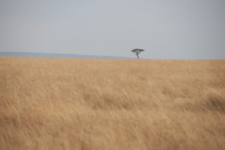 Kenya grassland Stock Photo