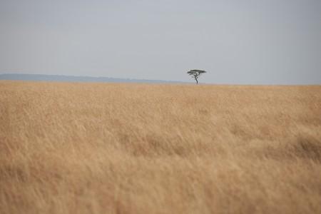 levit: Kenya grassland Stock Photo
