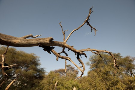 levit: Samburu National Reserve in Kenya Stock Photo