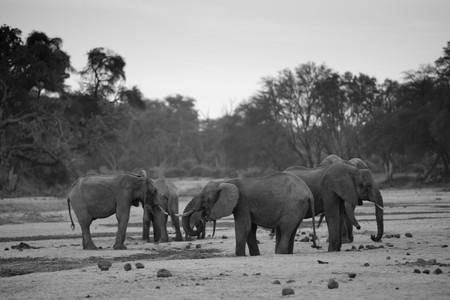 Elephant wildlife in Kenia