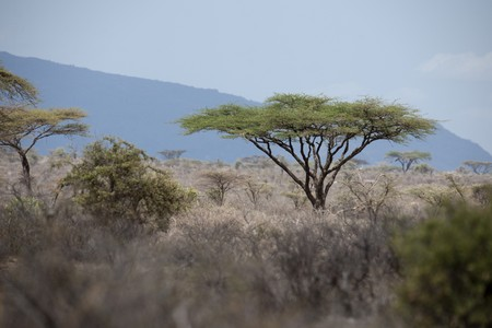 Samburu National Reserve in Kenya Stock Photo