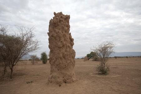 levit: Termite hill in Kenya Stock Photo