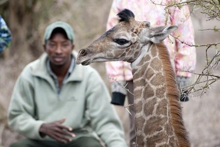 guia turistico: Ni�as con gu�a tur�stico y la jirafa Editorial