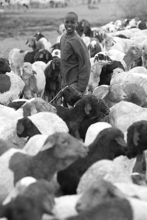 herdsman: Kenyan boy with goats