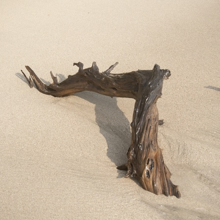 Driftwood on the beach in Costa Rica photo