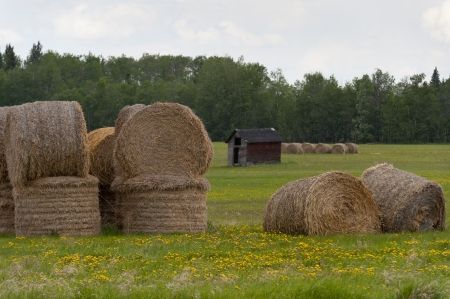 alberta: Hay bales in a field, Northern Alberta, Alberta, Canada Stock Photo
