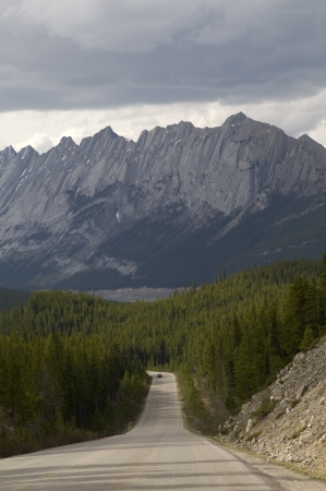 Road passing through a forest, Jasper National Park, Alberta, Canada photo
