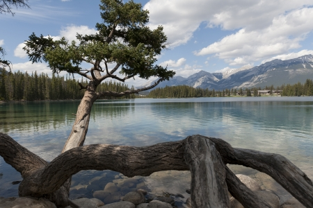canadian rockies: Beauvert Lake with mountains in the background, Jasper National Park, Alberta, Canada