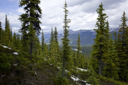 Snow covered trails in a forest with mountains in the background, Bald Hills Trail, Jasper National Park, Alberta, Canada