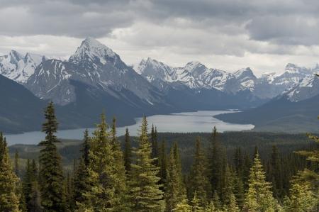 Evergreen trees in a forest, Maligne Lake, Jasper National Park, Alberta, Canada Stock Photo