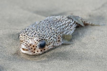 Close-up of a fish, Sayulita, Nayarit, Mexico Stock Photo - 14209243